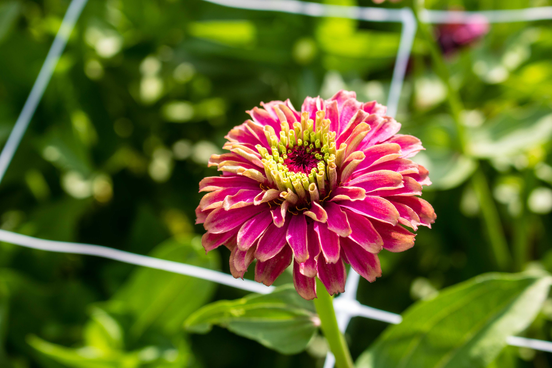 Flower Picking Oklahoma Agritourism Oklahoma S Growing Adventure